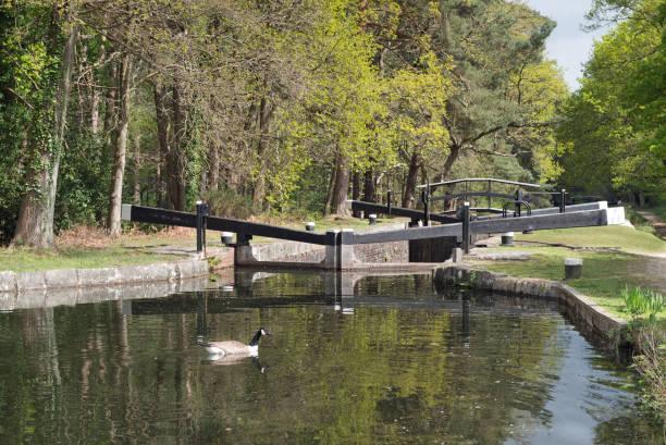 Basingstoke Canal Lock in Springtime stock photo