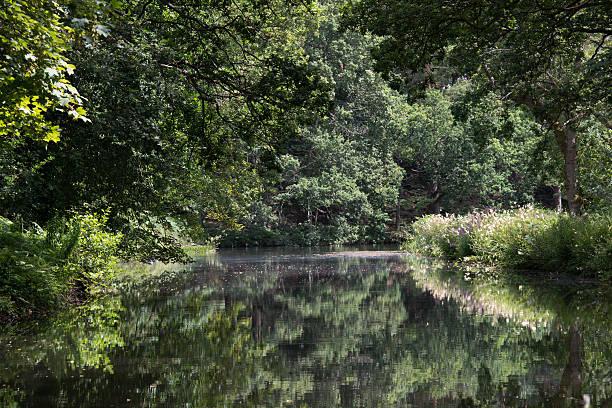 Basingstoke canal reflections stock photo