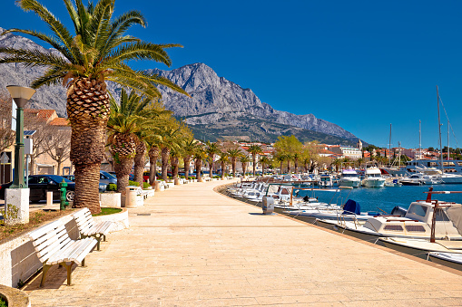 istock Baska Voda palm waterfront view, in Makarska riviera, Dalmatia region of Croatia 962074798
