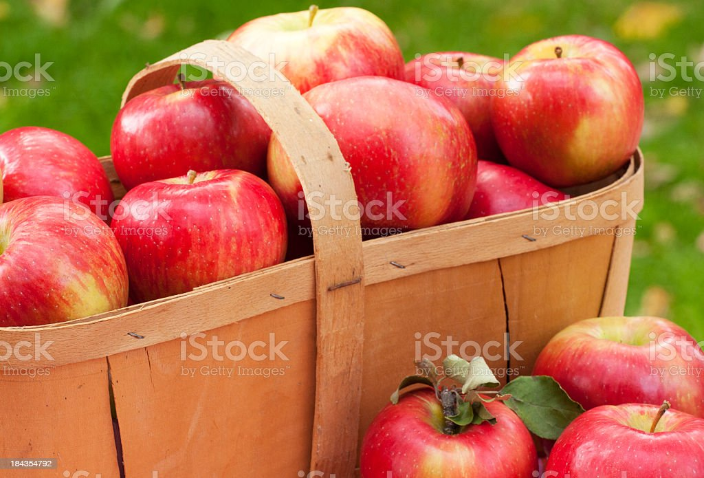 A basket full of apples in a field stock photo