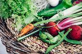 Close-up of basket full of freshly harvested vegetables from garden