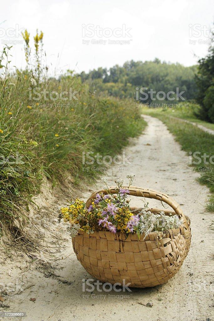 Basket full of herbs royalty-free stock photo
