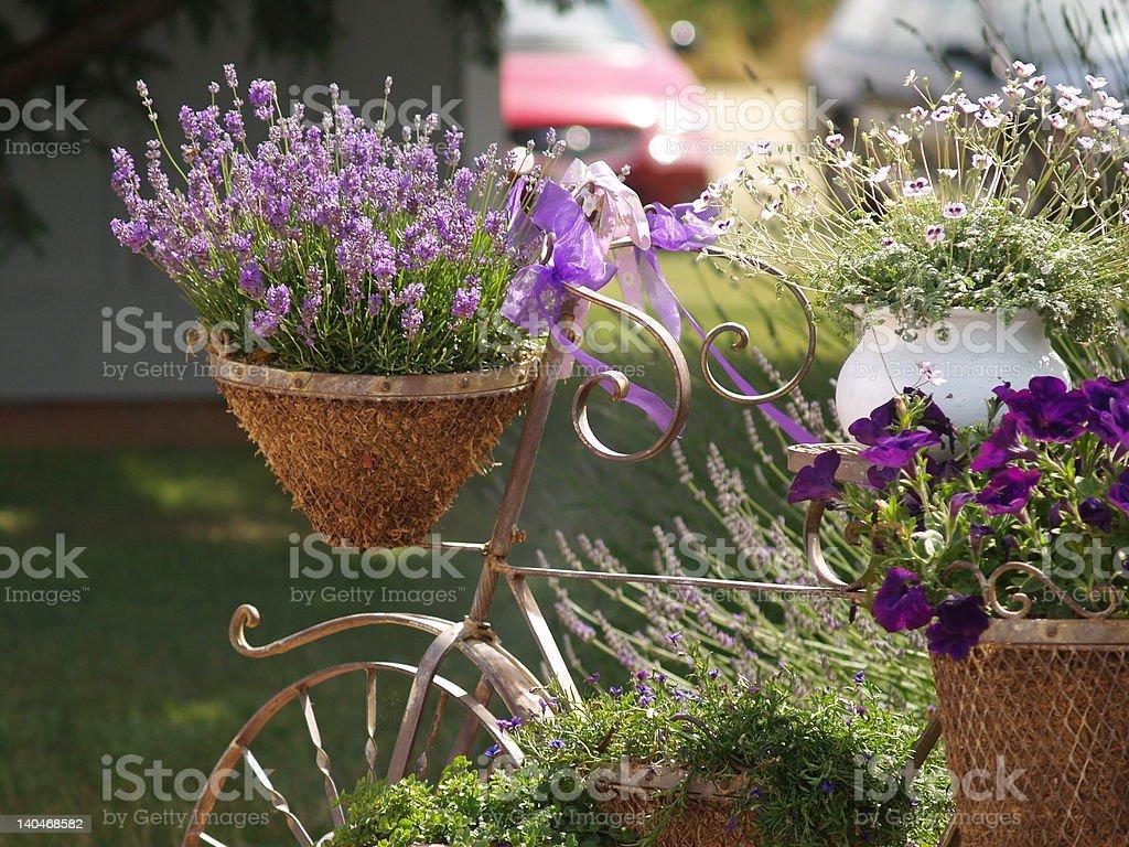 Basket full of Lavender stock photo