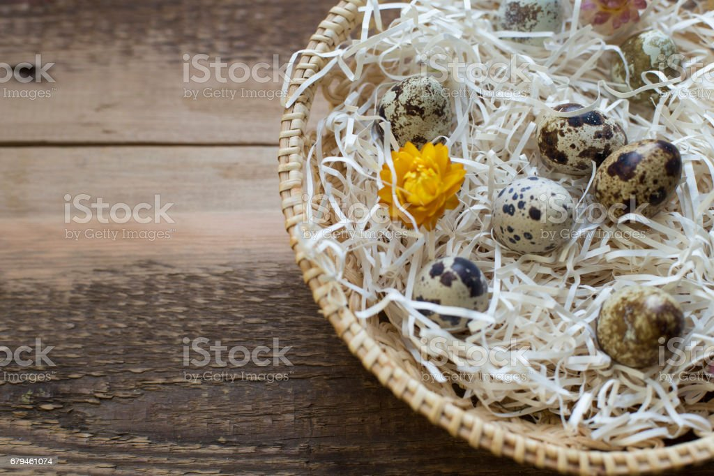 Basket full of quail eggs royalty-free stock photo