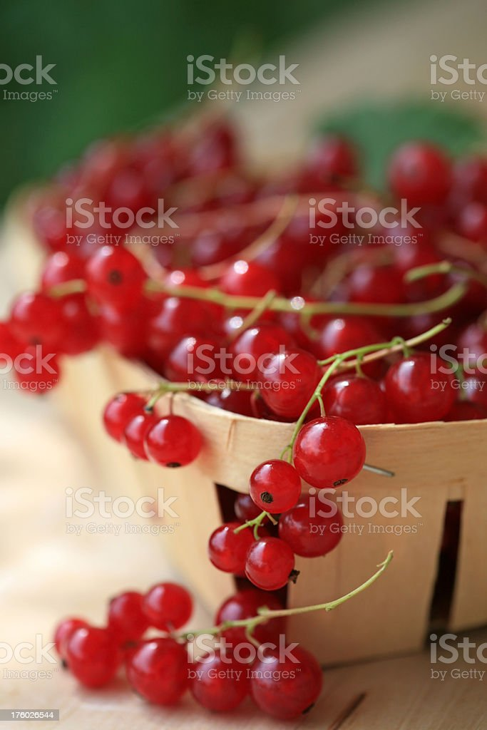 Basket full of red currants royalty-free stock photo