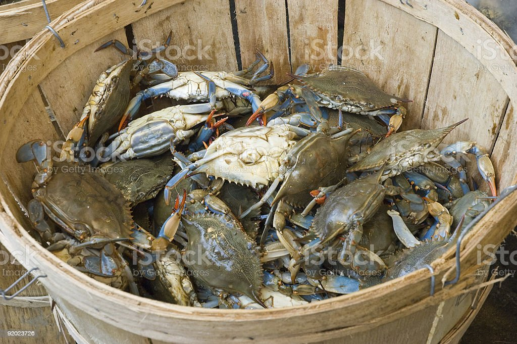 Basket of Blue Claws stock photo