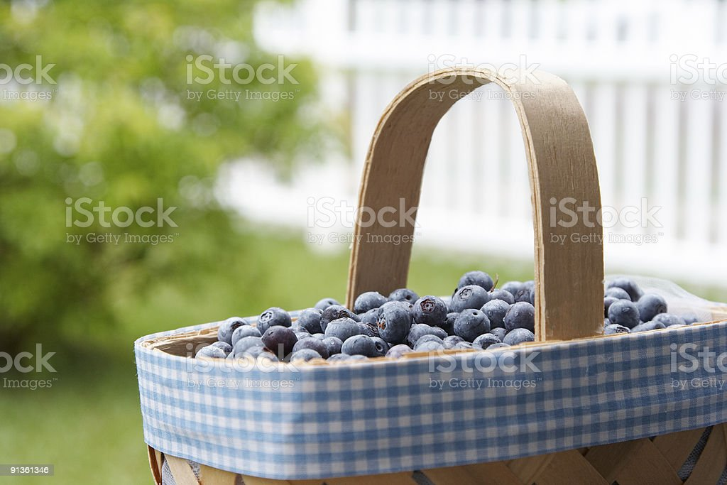 Basket of Blueberries royalty-free stock photo