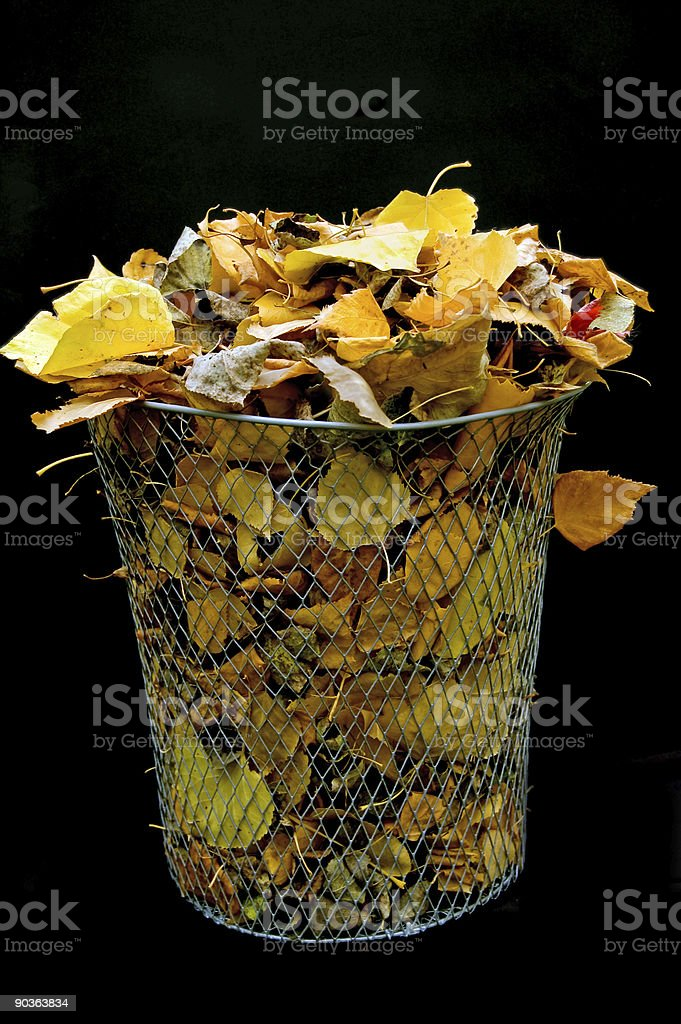 Basket of Fall Leaves royalty-free stock photo