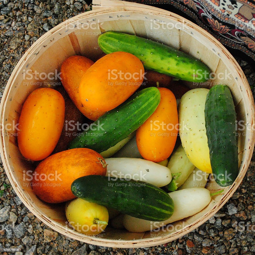 Basket of Farm-Fresh Vegetables stock photo