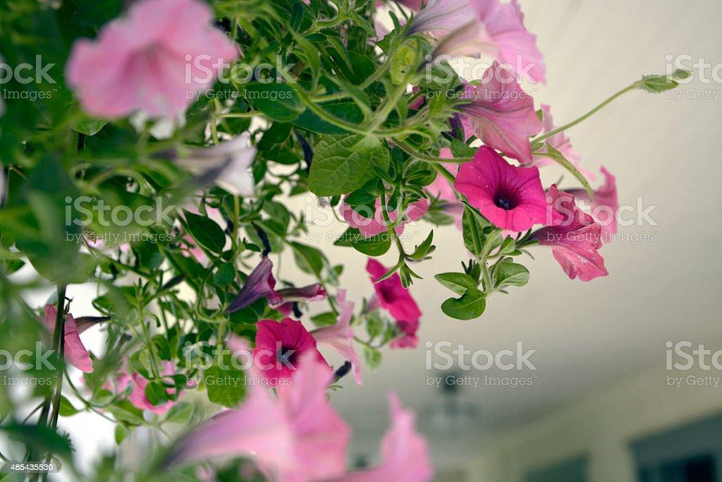 Basket of flowers stock photo