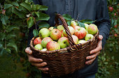 Basket of fresh apples in hands