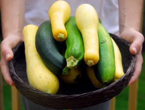 Person presenting basket of garden fresh squash and zucchini