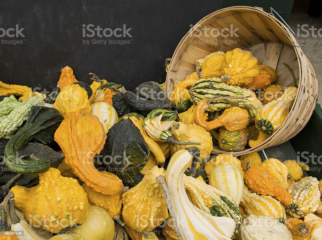 Basket of Gourds royalty-free stock photo