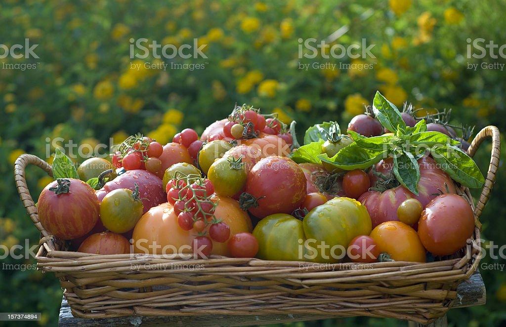 Basket of Homegrown Summer Produce, Heirloom Tomatoes Vegetable Harvest stock photo