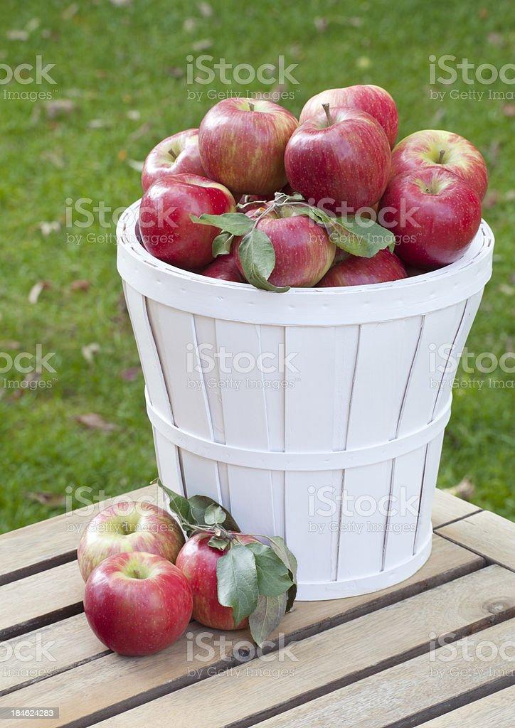 Basket of Honey Crisp Apples stock photo