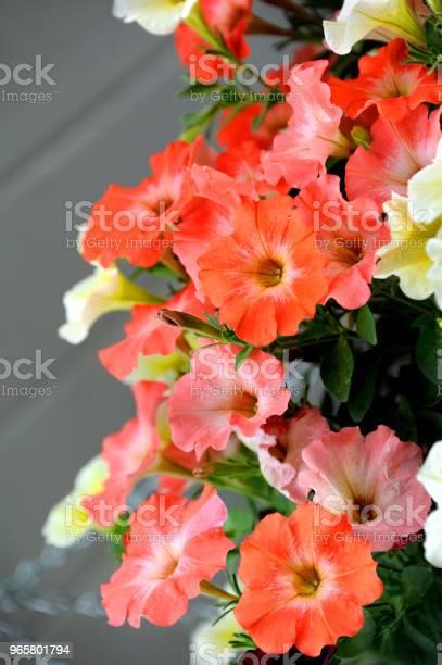 Basket Of Orange Stock Photo - Download Image Now