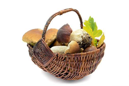 Basket of penny bun, golden chanterelle and bay boletus at isolated background.