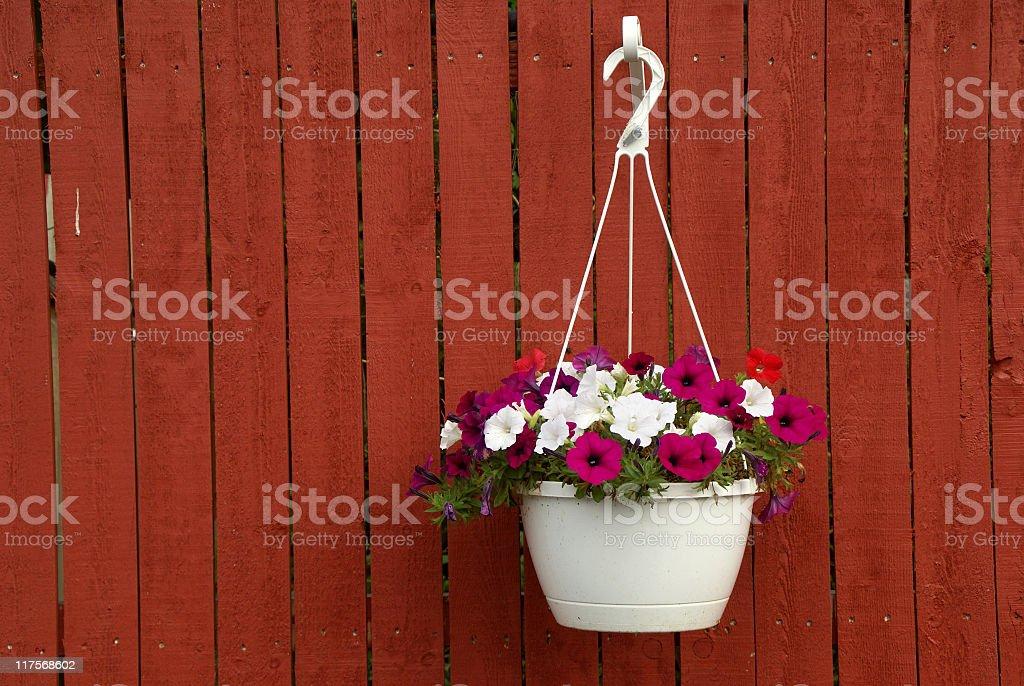 Basket of Petunias stock photo