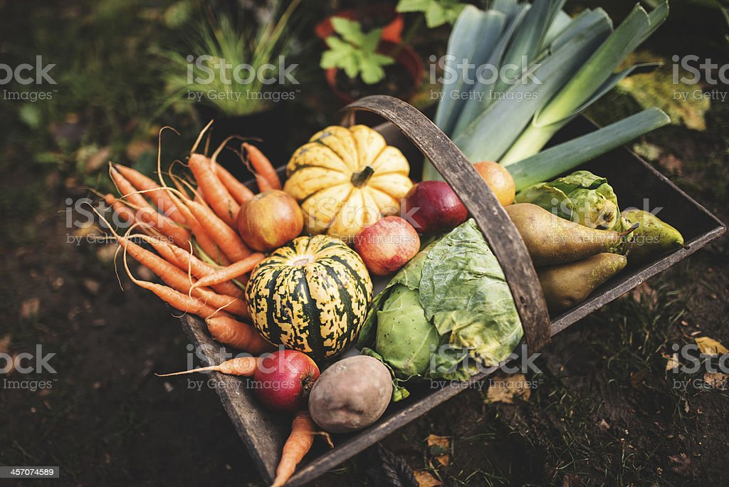 basket of raw vegetables stock photo