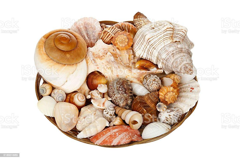 basket of seashells stock photo