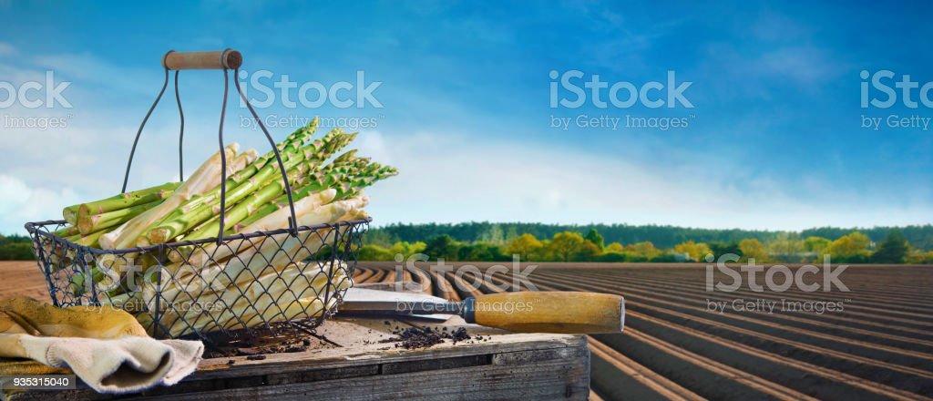 Cesta de espárragos blancos y verdes frente a campo de espárragos - foto de stock