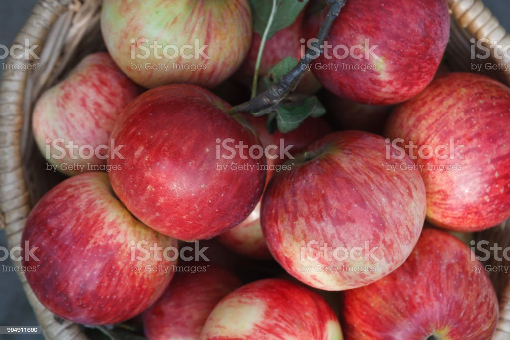 Basket with apples, autumn harvest background royalty-free stock photo