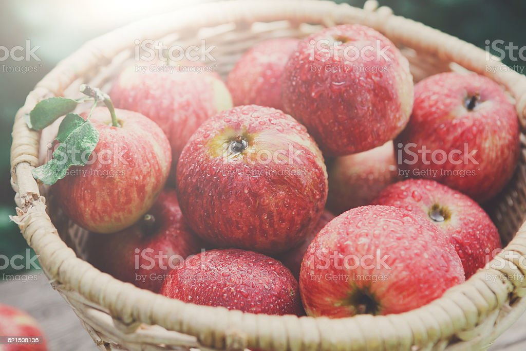 Basket with apples harvest in fall garden foto stock royalty-free