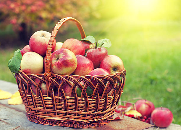 korb mit äpfeln auf dem rasen in der orchard - bio lebensmittel stock-fotos und bilder