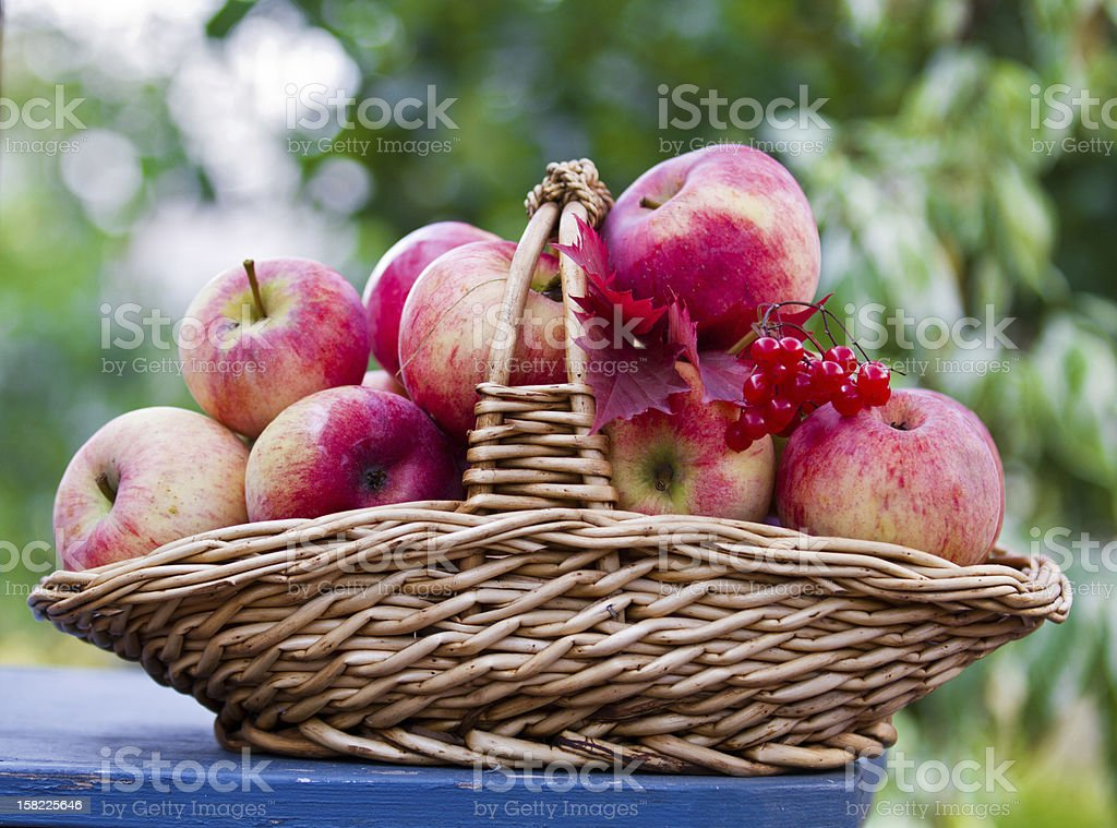 Basket with apples on the table royalty-free stock photo