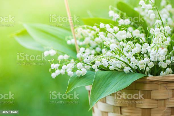Basket With Bouquet Of Lillyofthevalley In Stock Photo - Download Image Now