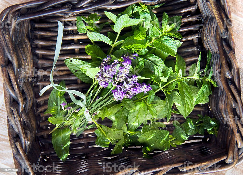 Basket with fresh herbs - mint and lavender stock photo