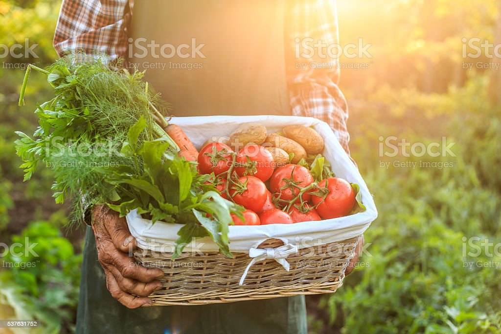 Basket with fresh vegetables stock photo