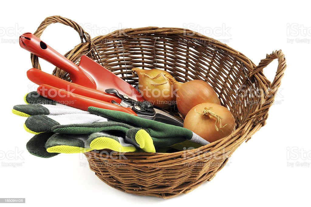 Basket with Gardening trowel shears gloves onions royalty-free stock photo