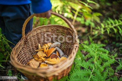 Basket with mushrooms in kids hands