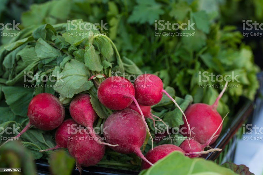A basket with newly harvested organic radishes - Royalty-free Agriculture Stock Photo