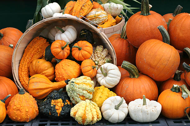 basket with overflowing pumpkins - autumn background - gourd stock photos and pictures