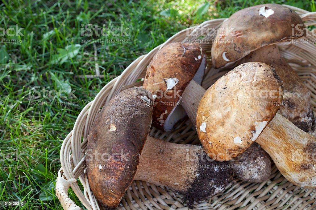 Basket With Porcini stock photo