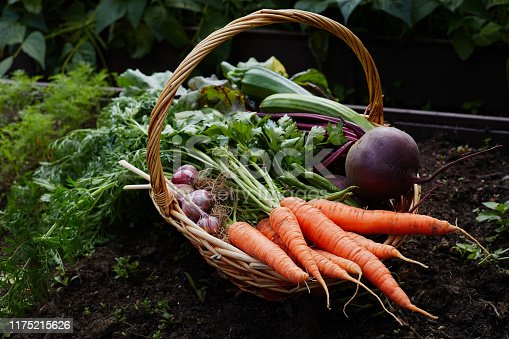 Basket with ripe organic vegetables carrot beetroot and zucchini