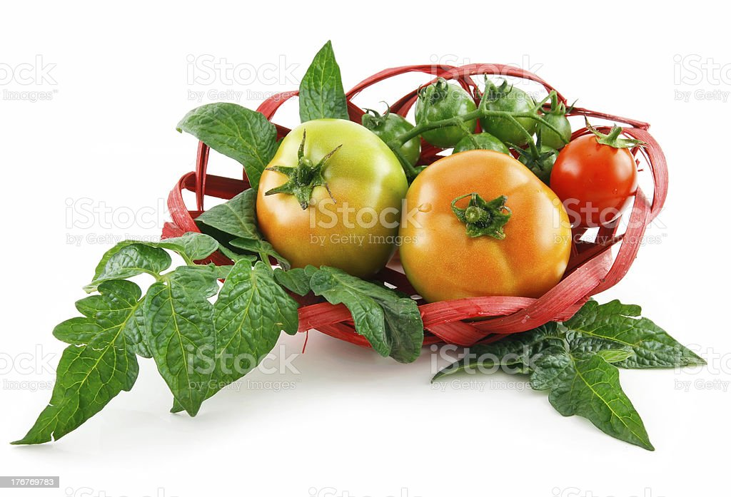 Basket with Ripe Tomatoes (Still Life) Isolated on White royalty-free stock photo