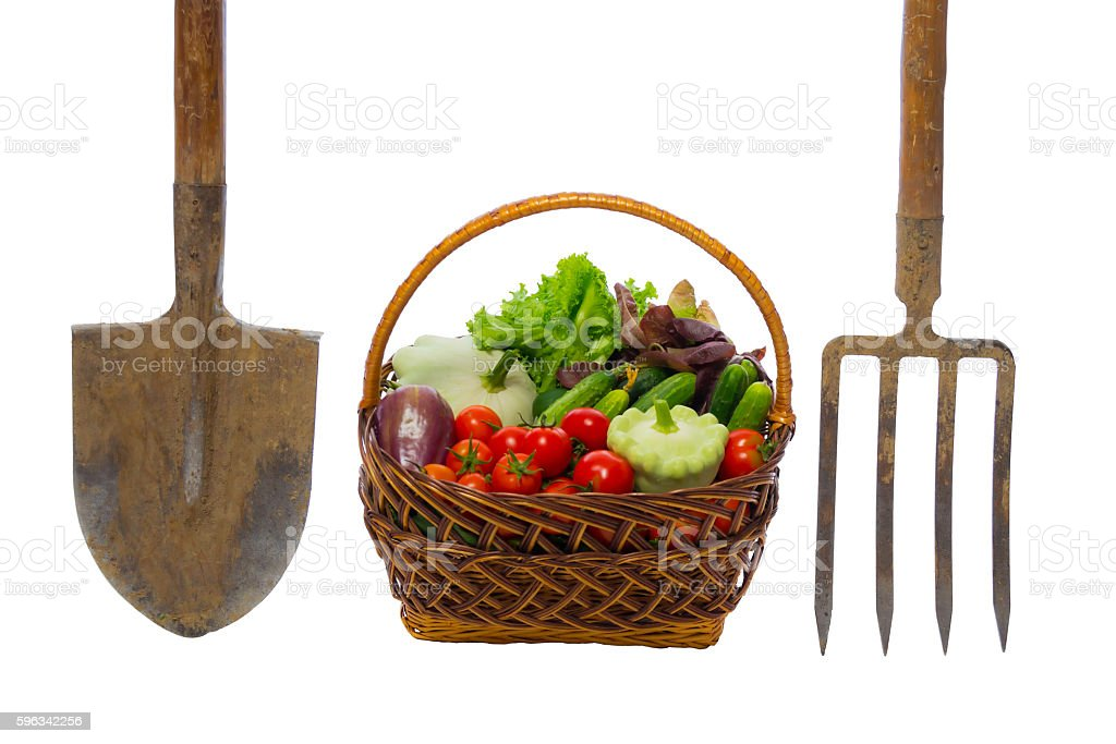 basket with vegetables and garden tools on white royalty-free stock photo