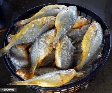 istock Basket with Yellow Croakers 495207991