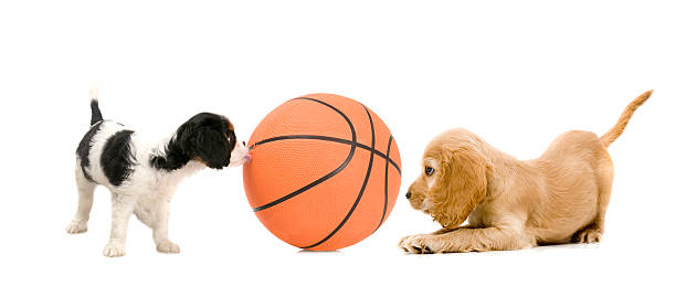 basketball player – Foto