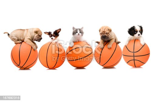 cat and dogs on the ball