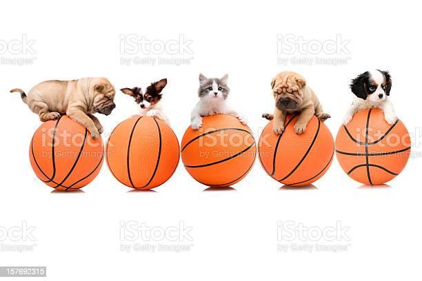 Basketball team picture id157692315?b=1&k=6&m=157692315&s=612x612&h=u3fs uhc3  zxmhtuu9ixnwdwzs1wzeyxv6dsnhbhnu=