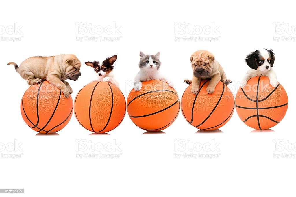 basketball team stock photo