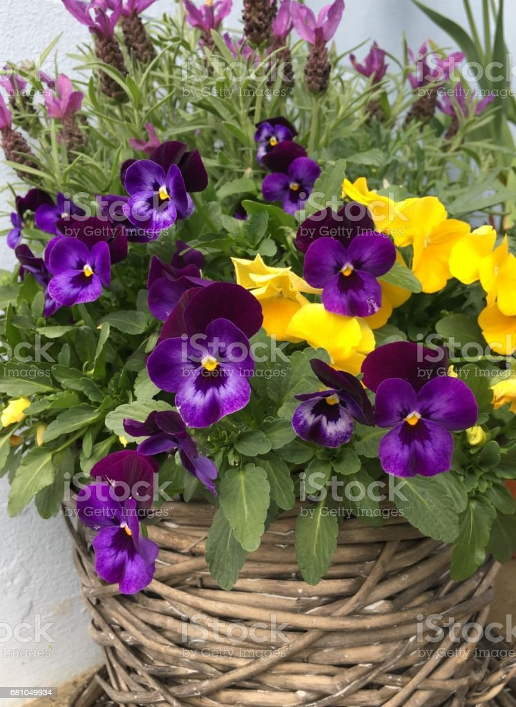Baskets of summer flowers royalty-free stock photo