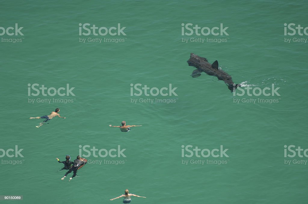 Basking Shark, Cornwall stock photo