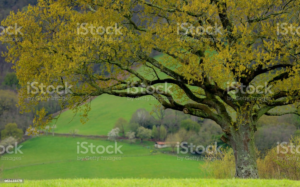 Pays Basque - Photo de Arbre libre de droits