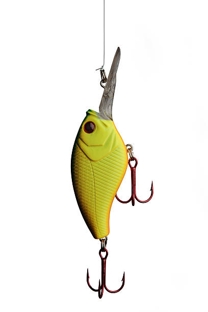 bass fish outline pictures images and stock photos