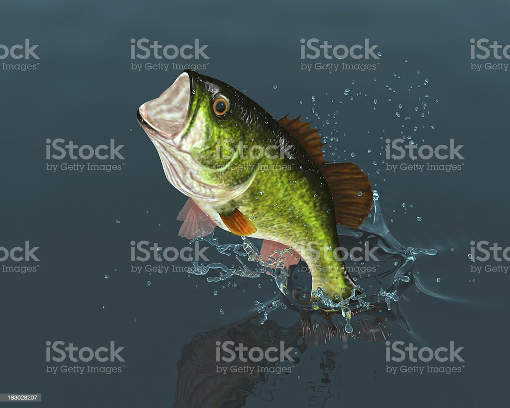 Bass Leaping stock photo